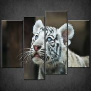 White Tiger Cub Canvas Print Picture Wall Art Home Decor Free Delivery