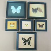 Vintage Lot Of 6 Authentic Real Mounted And Framed Butterflies By Polmour Company