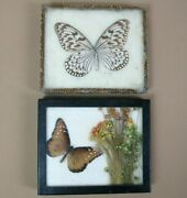 Vintage Lot Of 2 Authentic Real Mounted And Framed Butterflies