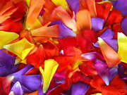 118363 Bright Flower Petals Red Purple Yellow Home Decor Laminated Poster Us