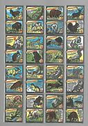 Cigarette/trade/cards.anglo American Chewing Gum.animal World.wax.c1965set