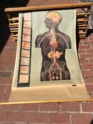 Vtg 9 Denoyer-geppert Canvas Pull Down Science Charts On Wood Wall Mount Holder