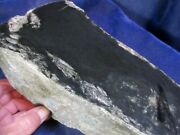 Olive Jade / Nephrite Boulder From Wyoming - Old Claim Stock - 18.6 Pounds
