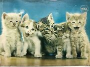 Vintage Kodak Cats Picture From The 1960s