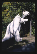 Unframed Photo Prehistoric Forest Onsted Michigan 1988 Margolies John 21a