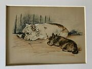Bulldog And Scottish Terrier - Lucy Dawson 1930's Antique Print Matted