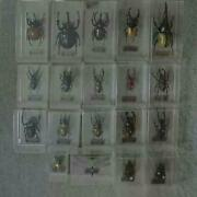 Deagostini World Insect Data Book Figure 19 Pieces Binder From Japan F/s