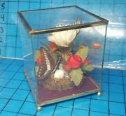 Vintage Real Mounted Taxidermy Butterflies And Flowers In Glass Display Case Cube