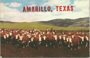 Amarillo Texas Cattle In Corral Landscape View Vintage Postcard - Unposted