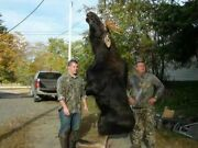 Guided Maine Moose Hunts