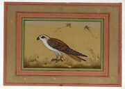 Mughal Miniature Painting Single Sparrow Surrounded By Birds Real Gold And Gouache