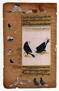 Mughal Miniature Painting Of Pigeons And Other Birds Real Gold Art On Paper