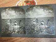 Old Antique Cotton Picking Grinders Black Americana Stereoview Card