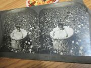 Old Antique Phonographs Kids In Cotton Baby Black Americana Stereoview Card