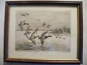Artist Signed Duck Hunting Print Litho Or Sketch Canvasback Lake Manitoba Marsh