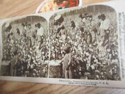 Old Antique Cotton Pickers Black Americana Stereoview Card
