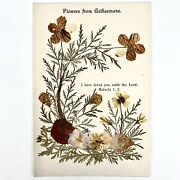 C. 1890 Flowers From Gethsemane Cabinet Card Real Pressed Plants Jerusalem Relic