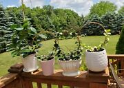 Trellis Copper Circle Trellises For Hoyas And Other Trailing House Plants