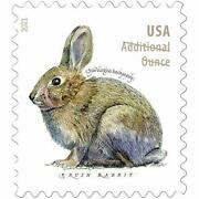 Brush Rabbit Additional Ounce Forever Postage Stamps Coil Of 100 Us Postal Fi...