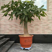 Plastic Movable Flower Pot Tray Trolley Indoor Rolling Stand Base Garden