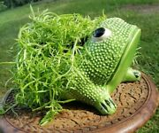 1960s Signed Original Jean Roger Frog Planter | Made In Paris | 8 Inches