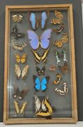 As-is Vintage Real Framed Butterfly Collection - 21 Butterflies + 1 -glass Frame