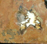 Priday Ranch Plume Agate Thunderegg Slab … Interesting Plumes, Colors And Patterns
