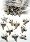 10x Shark's Teeth Pendants Genuine Real Sharks Tooth For Necklaces Bulk Lot New
