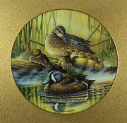 A Loving Look Duck Families Quiet Moment Plate Bruce Langton Blue Winged Teal