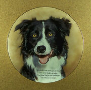 Cherished Border Collies Eyes Of Love Plate Dog Danbury Mint Collie Charming