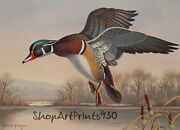 Ronald Louque 1991 Washington Waterfowl Stamp Print And 2 Stamps