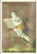 Anthropomorphic Frog Victorian Trade Card Butter Churns Clothes - A9