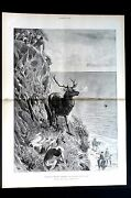 Hunters 1896 Stag And Hound Dogs Fall Off Sea Cliff Hunting Centerfold Art Print