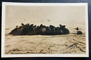 Mint Usa Real Picture Postcard Walrus On The Ice Be Ring Sea Alaska