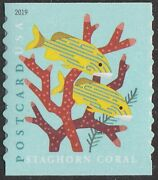 Us 5368 Coral Reefs Staghorn Postcard Single From Coil Of 100 Mnh 2019