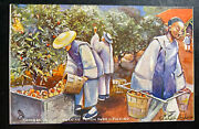 Mint Picture Postcard Chinese On A Californian Peach Farm Picking China