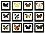 12 New Real Butterfly Insect Taxidermy Display Wood Framed Decor Wall Hanging