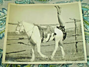 Lucyle Richards Trick Horse Cowgirl Rodeo Cowboy Tail Stand Original Photo 1934