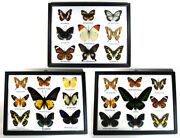 3 Wood Framed Real Butterfly Insect Taxidermy Display Collection Art Wall Decor