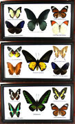 3 Real Butterfly Wood Framed Insect Taxidermy Display Collection Art Wall Decor