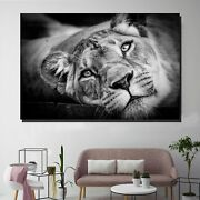 Resting Lioness Animals Lions And Tigers Canvas Art Print For Wall Decor
