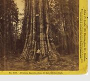 C1870 Yellow Mt Stereoview By Jp Soule Of Abraham Lincoln Big Tree At Yosemite