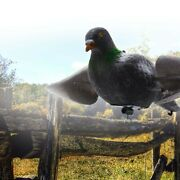 Coated Wood Flocked Pigeon Outdoor Hunting Shooting Tool Decoy Protects Plants