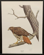 """Ronald J Louque Limited Edition Signed Print """"red-tailed Hawk"""" 22""""x28"""""""