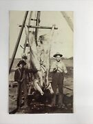 Rppc - Two Farmers With Hanging Butchered Dead Cow - Early 1900s