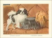 Japanese Spaniel, Yorkshire Terrier Dogs By Louis A Fuertes, Matted 1919