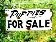 Vintage Painted Primitive Metal Puppies For Sale Barn Stable Farm Store Sign