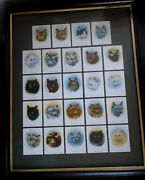 Very Rare Framed Set Of 1936 Cats Cigarette Cards From John Player