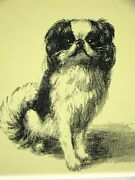 Cleanthe Japanese Spaniel 1933 Dog Art Print Matted