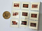 1973 Uk China Chinese Exhibition Bronze Coin With Photo Negatives Organiser Set